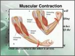 muscular contraction5
