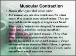 muscular contraction6