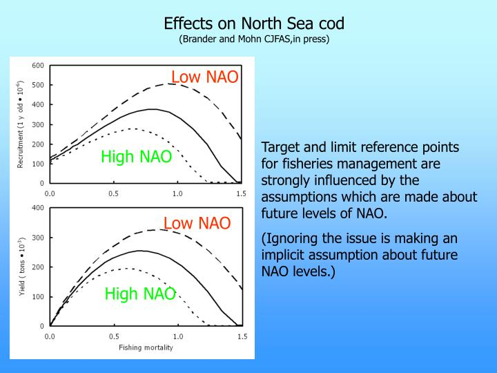 Effects on North Sea cod