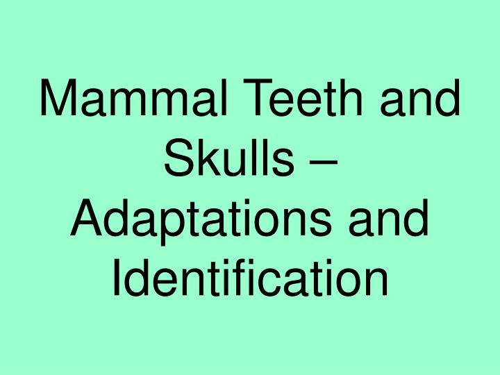 Mammal teeth and skulls adaptations and identification