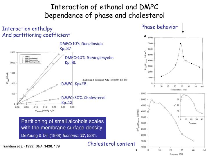 Interaction of ethanol and DMPC