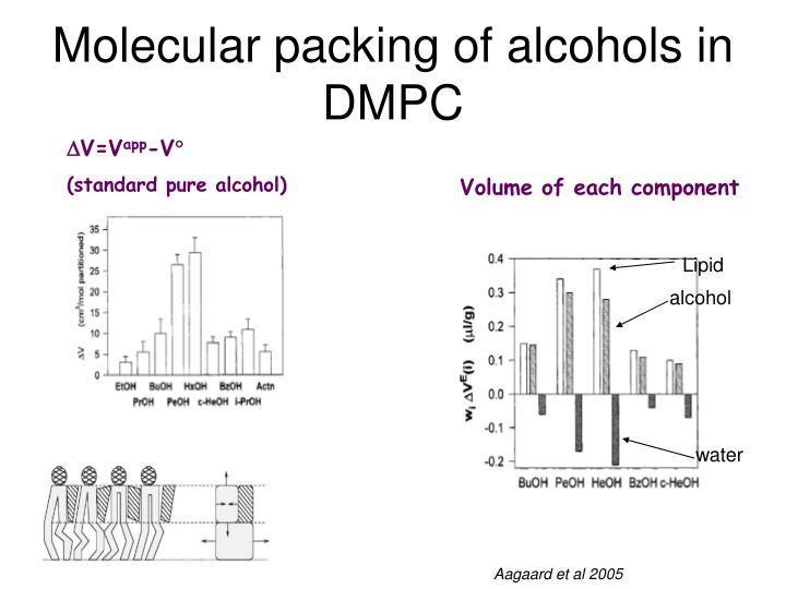 Molecular packing of alcohols in DMPC