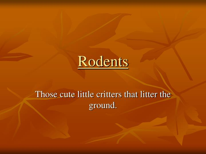 rodents n.