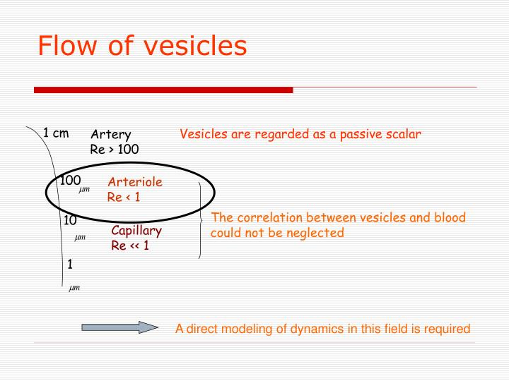 Flow of vesicles