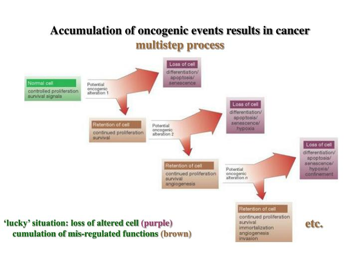 Accumulation of oncogenic events results in cancer