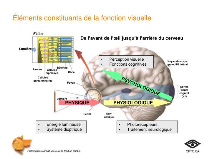 Éléments constituants de la fonction visuelle