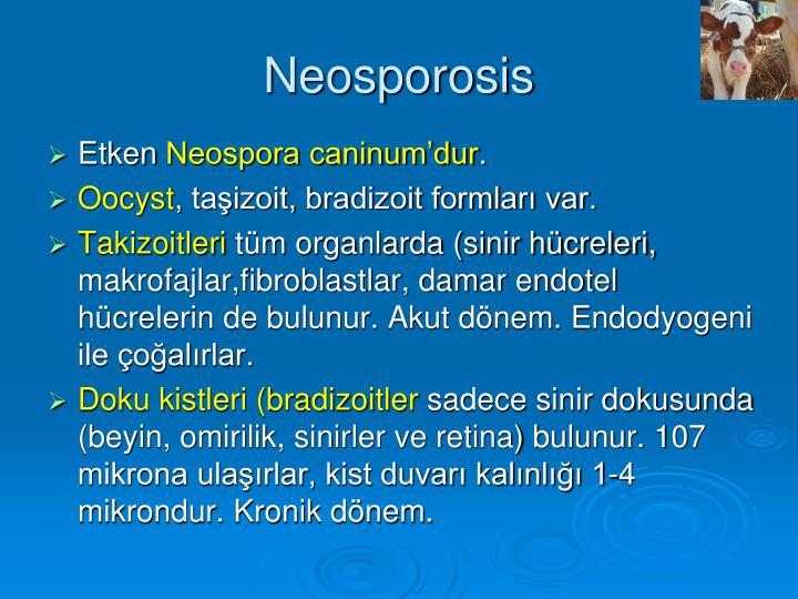 Neosporosis