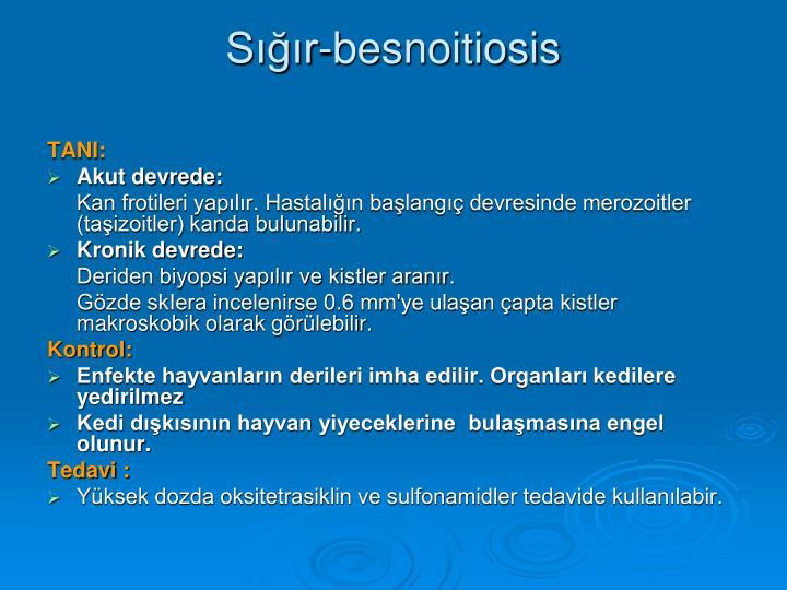 Sığır-besnoitiosis