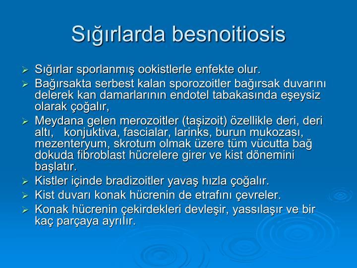 Sığırlarda besnoitiosis