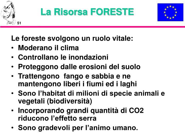 La Risorsa FORESTE