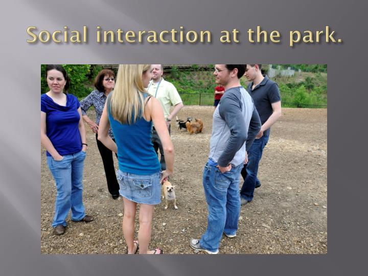 Social interaction at the park.