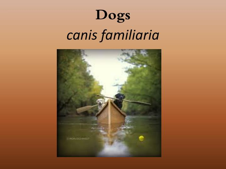 dogs canis familiaria n.