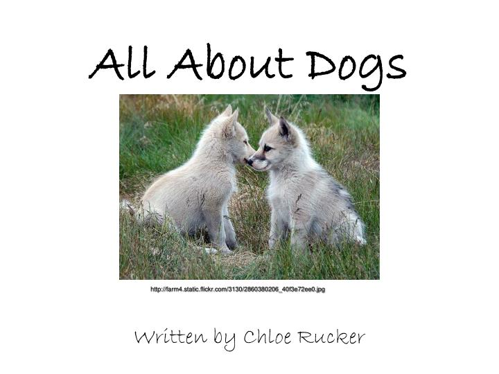 all about dogs n.