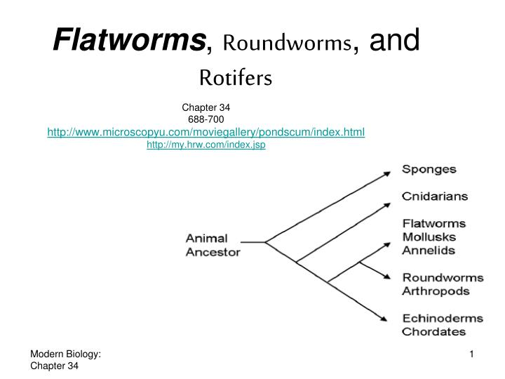 flatworms essay Have you ever heard of an organism from the phylum platyhelminthes do you know how they reproduce in this lesson you will learn the answers to.