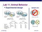 lab 11 animal behavior4