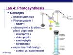 lab 4 photosynthesis2