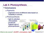 lab 4 photosynthesis3