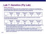 lab 7 genetics fly lab4