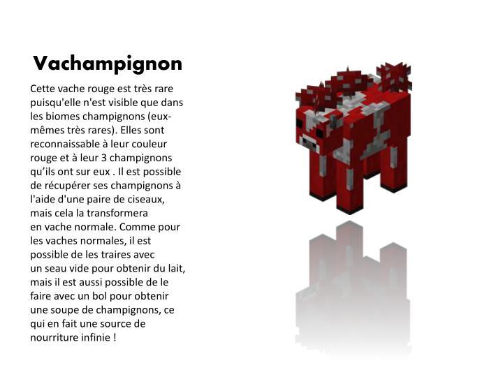 Vachampignon