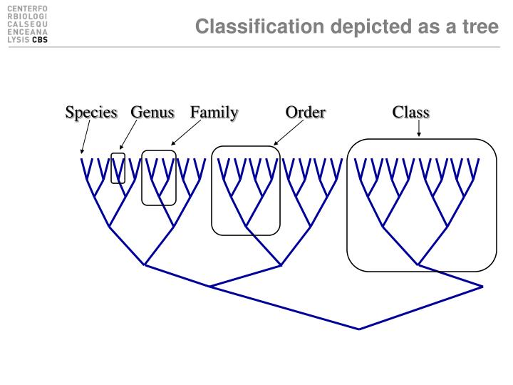 Classification depicted as a tree