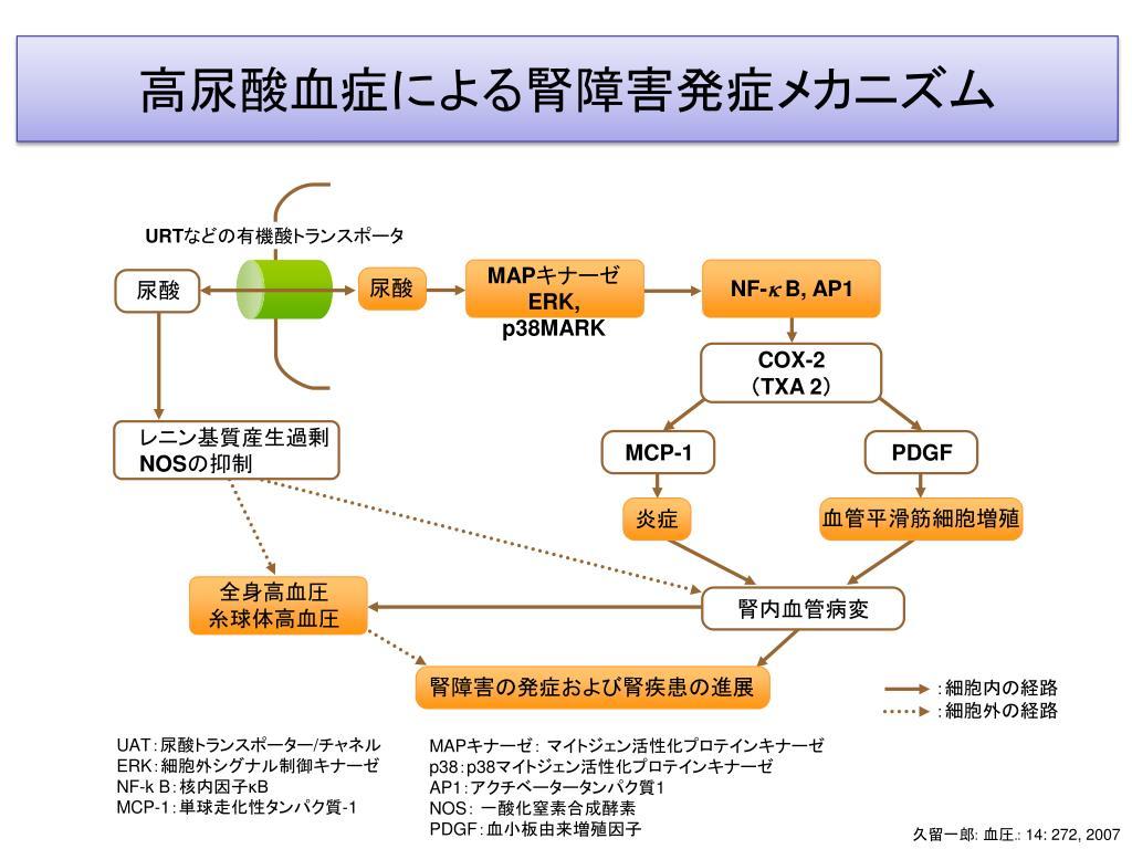 1. 腎障害をきたす全身性疾患 2. 尿細管障害 - PowerPoint PPT Presentation