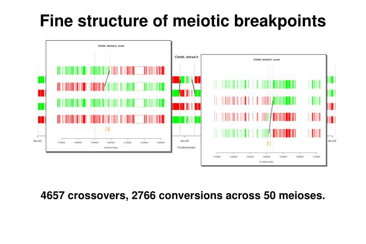 Fine structure of meiotic breakpoints