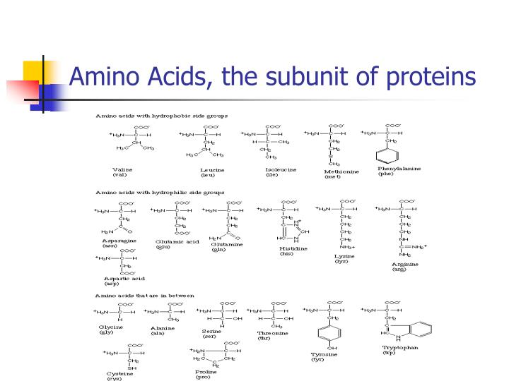 Amino Acids, the subunit of proteins