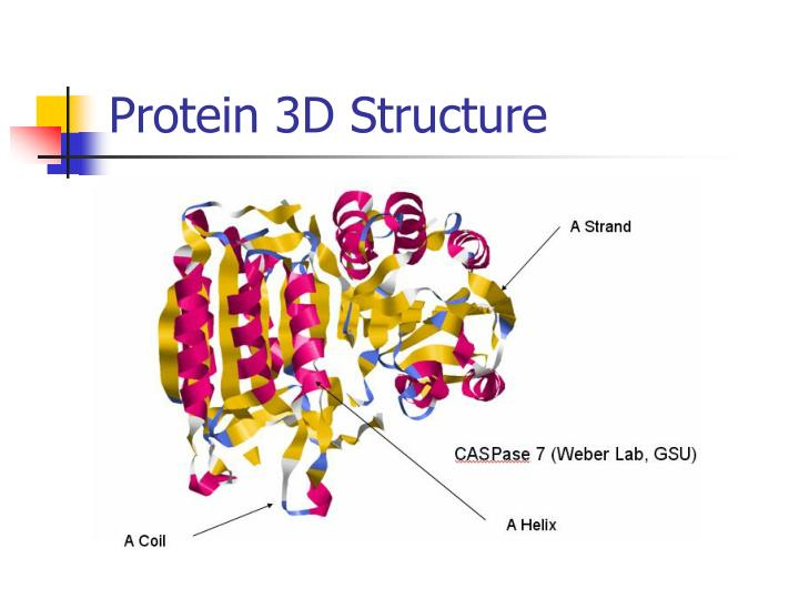 Protein 3D Structure