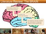 literature review the brain
