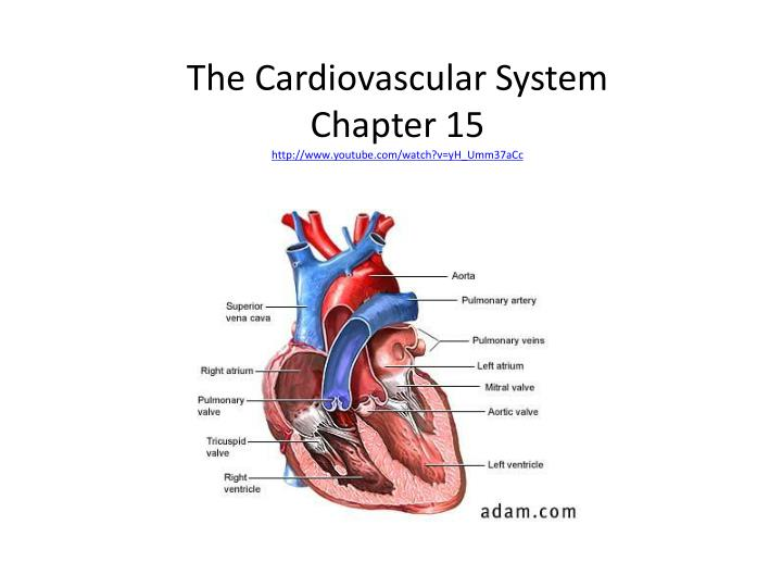 chapter 1 cardiovascular disorders case study 1-1 nutr 245: medical nutrition therapy: a case study approach 3rd ed case 6 – hypertension and cardiovascular disease  name: kim lamora  remember rd's are experts in researching evidence-based practice for their patients so.