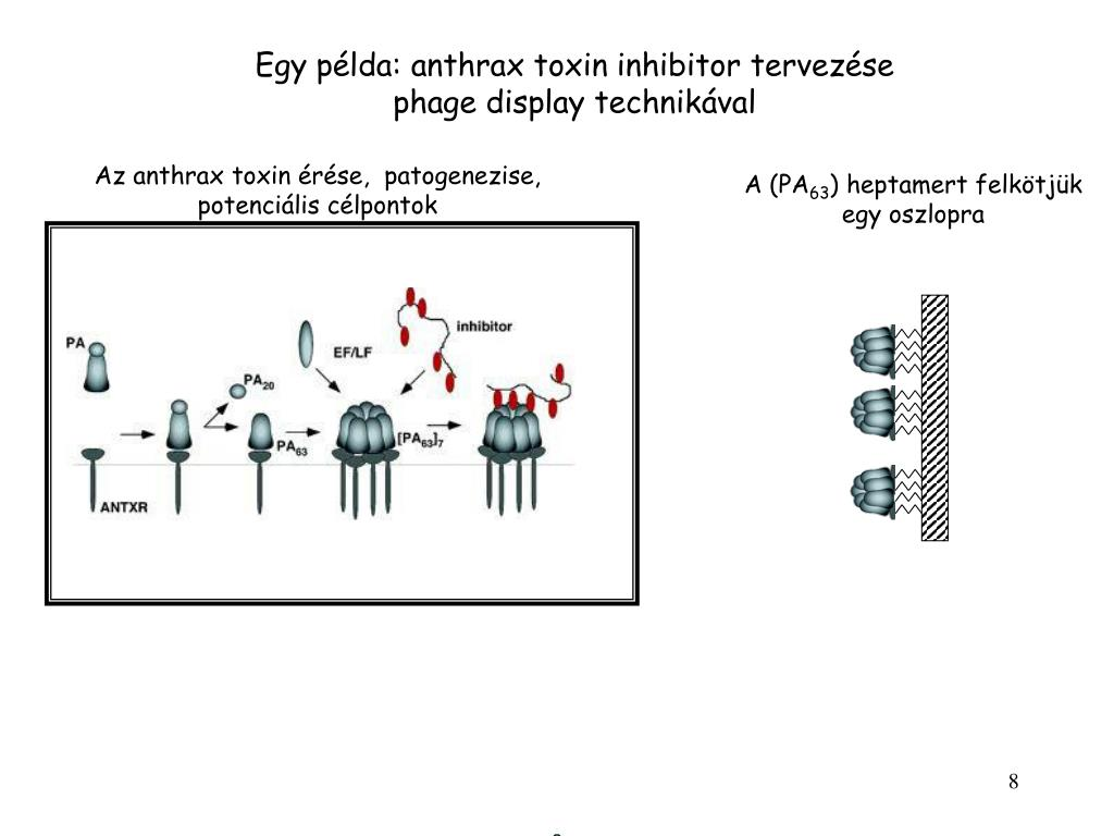 Neurotoxin – Wikipédia - Toxin példa