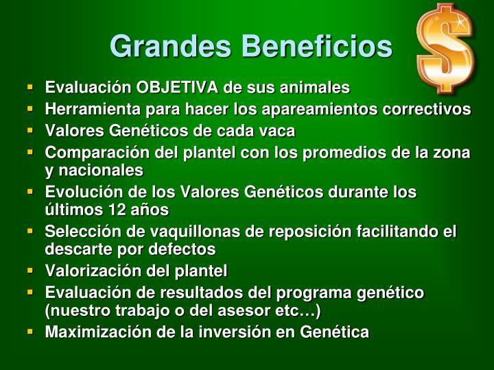 Grandes Beneficios