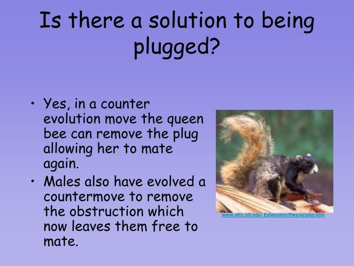 Is there a solution to being plugged?
