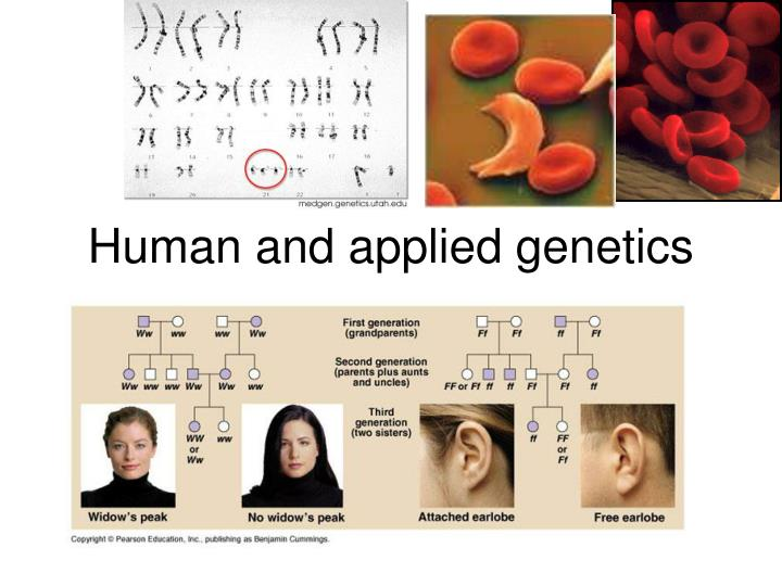 human and applied genetics n.