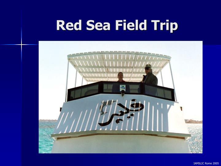 Red Sea Field Trip