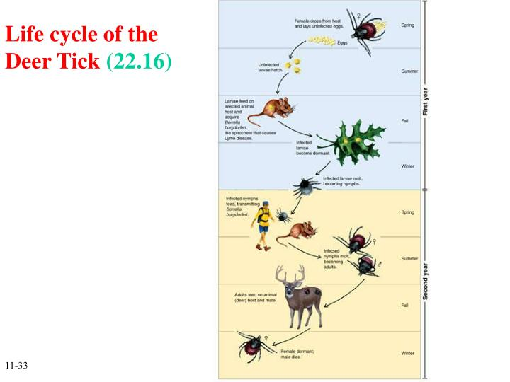 Life cycle of the