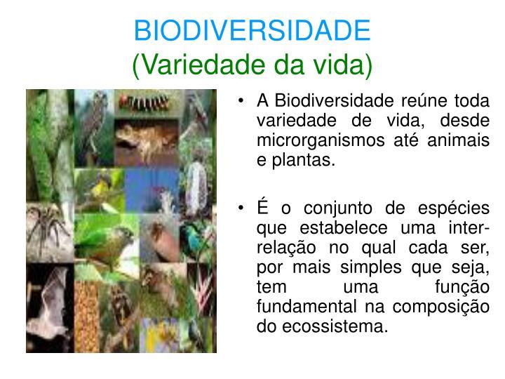 A Biodiversidade reúne toda variedade de vida, desde microrganismos até animais e plantas.