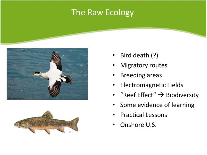 The raw ecology