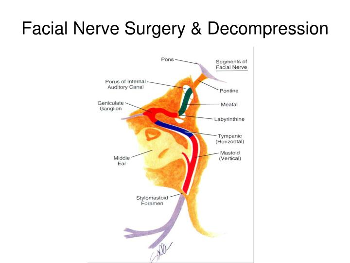 PPT - Facial Nerve PowerPoint Presentation - ID:4067477