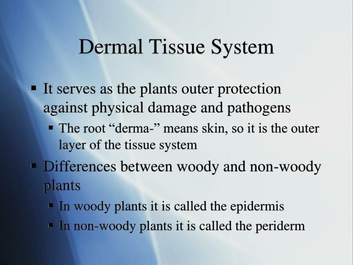 Dermal Tissue System