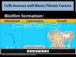 cells interact with biotic abiotic factors