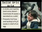 solid uric acid