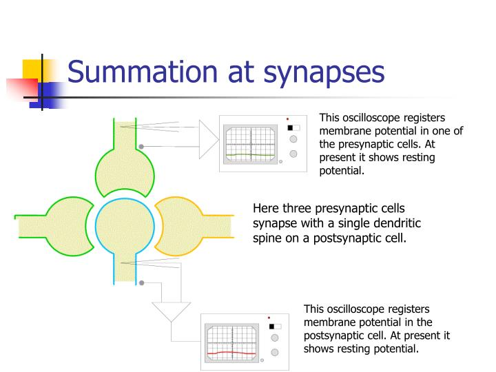 Summation at synapses