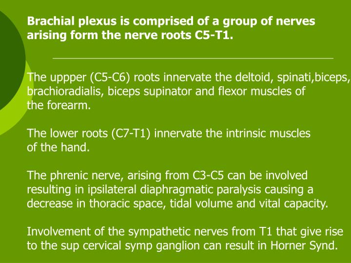 Brachial plexus is comprised of a group of nerves