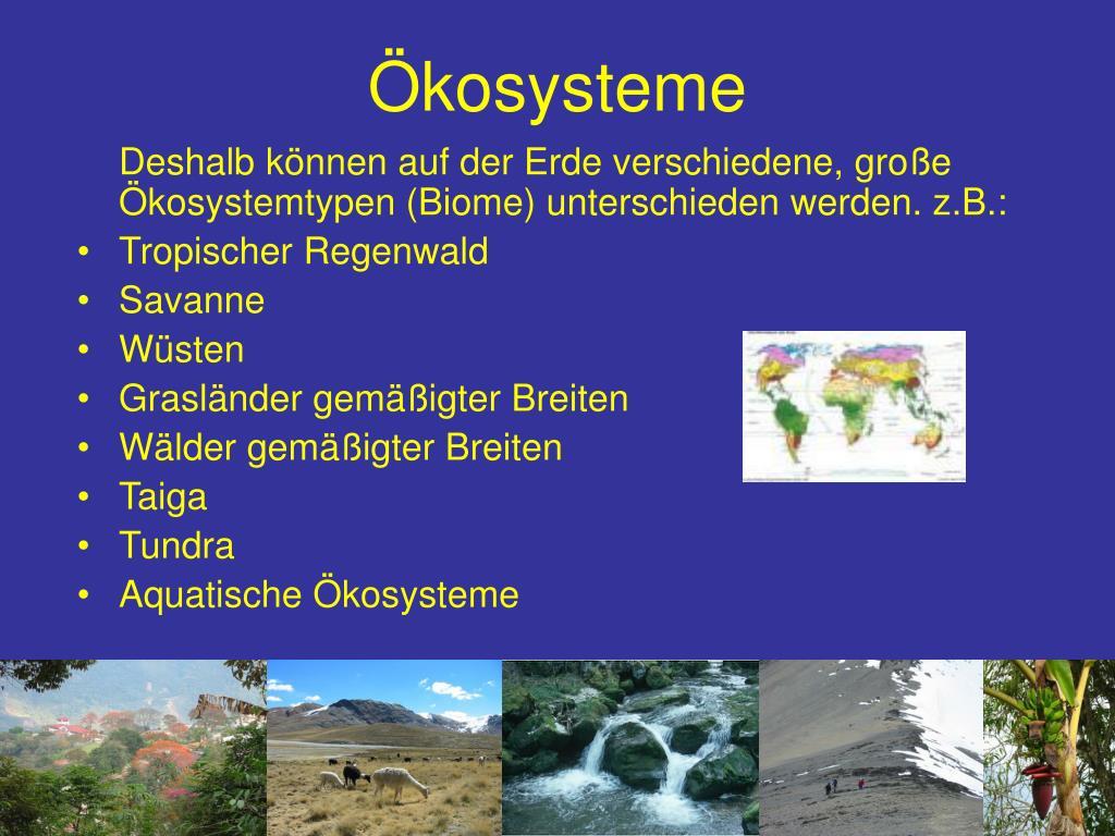 Okologie Aufbau Von Okosystemen 5