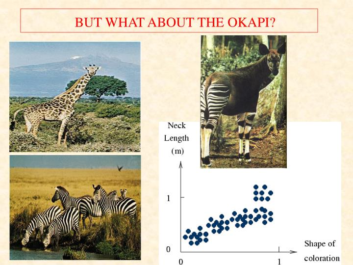 BUT WHAT ABOUT THE OKAPI?