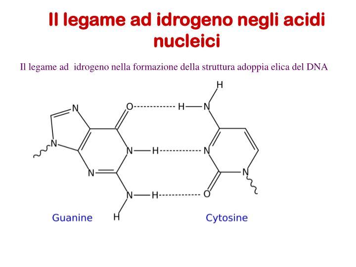 Il legame ad idrogeno negli acidi nucleici