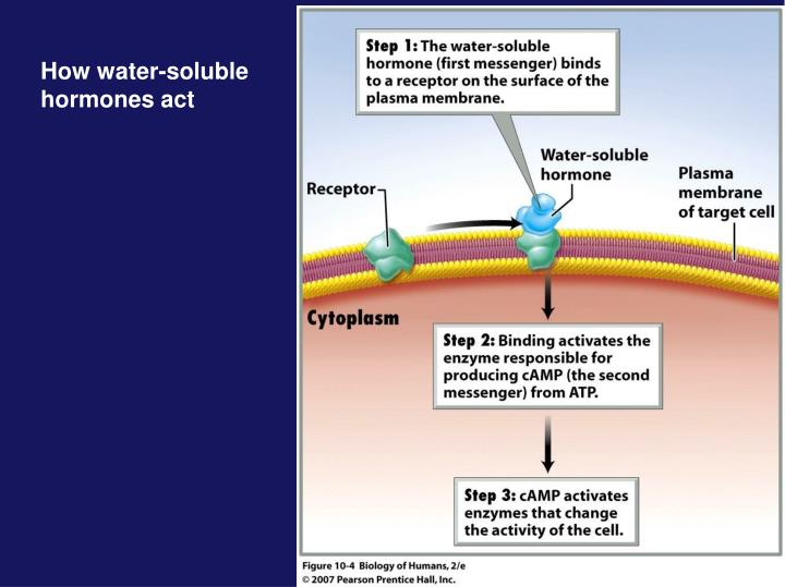 How water-soluble