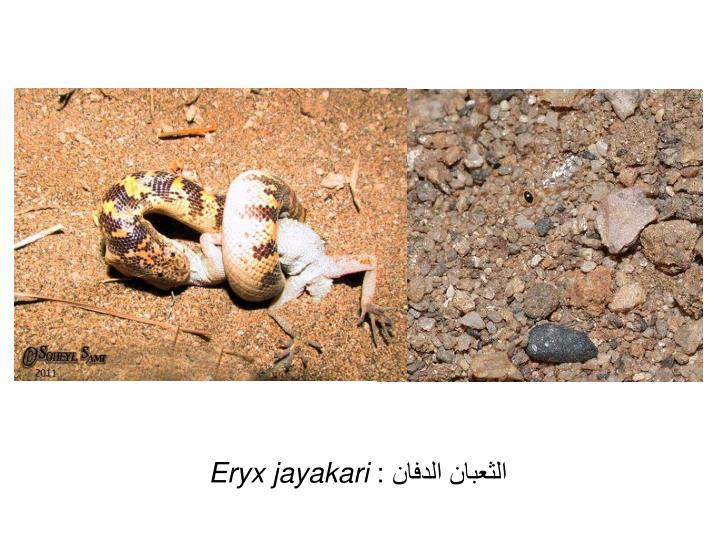 الثعبان الدفان :
