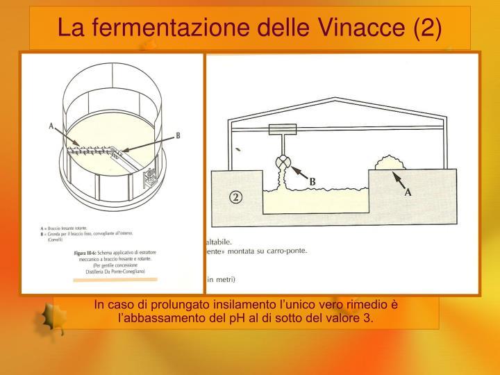 La fermentazione delle Vinacce (2)